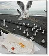 Red-billed Seagulls Canvas Print
