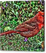 Red Bird Art Canvas Print