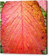 Red Blackberry Leaf Canvas Print