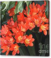 Red Blossoms At Lax Canvas Print