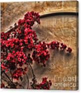 Red Bougainvilla Vine On Stucco Wall Canvas Print