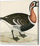 Red Breasted Goose Canvas Print