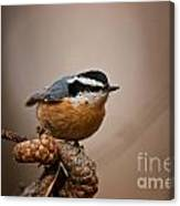 Red-breasted Nuthatch Pictures 36 Canvas Print