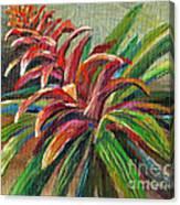 Red Bromiliad Canvas Print