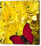 Red Butterfly On Poms Canvas Print