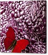 Red Butterfly On Red Mum Canvas Print