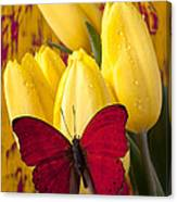 Red Butterfly Resting On Tulips Canvas Print