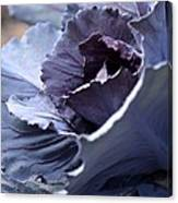 Red Cabbage Abstract Canvas Print