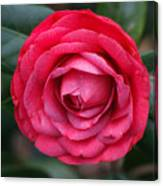 Red Camellia Canvas Print