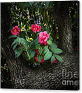 Red Camellias Canvas Print