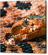 Red Carolina Pygmy Rattlesnake Canvas Print
