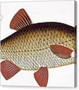 Red Carp Canvas Print