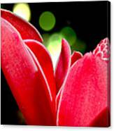Red Chalice Canvas Print