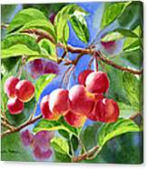 Red Crab Apples With Background Canvas Print