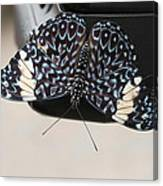 Red Cracker Butterfly Canvas Print