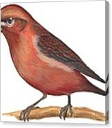 Red Crossbill Canvas Print