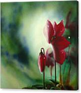 Red Cyclamen Canvas Print