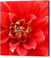 Red Dahlia Flower Canvas Print