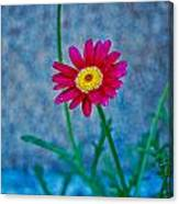 Red Daisy 2 Canvas Print