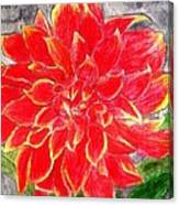 Red Dalia  Canvas Print