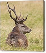 Red Deer  Cervus Elaphus Canvas Print