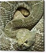 Red Diamond Rattlesnake 3 Canvas Print