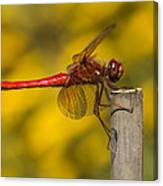 Red Dragonfly Waiting Canvas Print