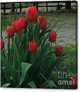 Red Dynasty Red Tulips Canvas Print
