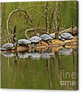 Red Eared Slider Turtles 2 Canvas Print