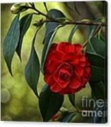 Red Elegance Canvas Print