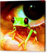 Red Eyed Australian Tree Frog  Canvas Print