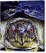 Red Eyed Turtle  Canvas Print