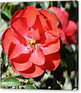 Red Flower I Canvas Print