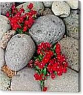 Red Flower In Rocks Canvas Print