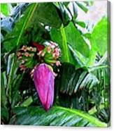 Red Flower Of A Banana Against Green Leaves Canvas Print