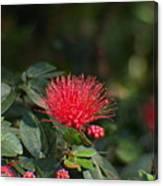 Red Flower Spraying Canvas Print