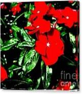 Red Flowers Among Green Leaves Canvas Print
