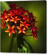 Red Flowers Canvas Print
