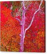 Pink Tree In A  Red Forest Canvas Print