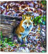 Red Fox At Home Canvas Print