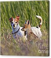 Red Fox Cub With Jack Russel Canvas Print