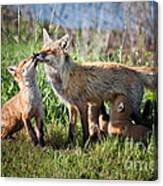 Red Fox Family Canvas Print
