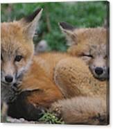 Red Fox Kit Stays Alert Canvas Print