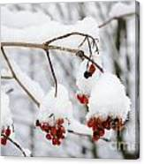 Red Fruit With Snow Canvas Print