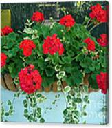 Red Geranium 1 Canvas Print