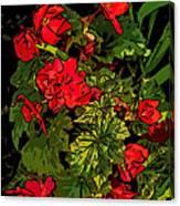 Red Geranium Line Art Canvas Print