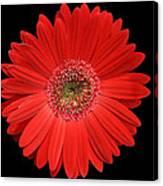 Red Gerber Daisy #2 Canvas Print