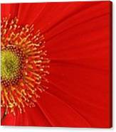 Red Gerber Delight Canvas Print