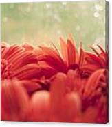 Red Gerbera With Green Background Canvas Print