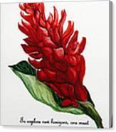 Red Ginger Poem Canvas Print